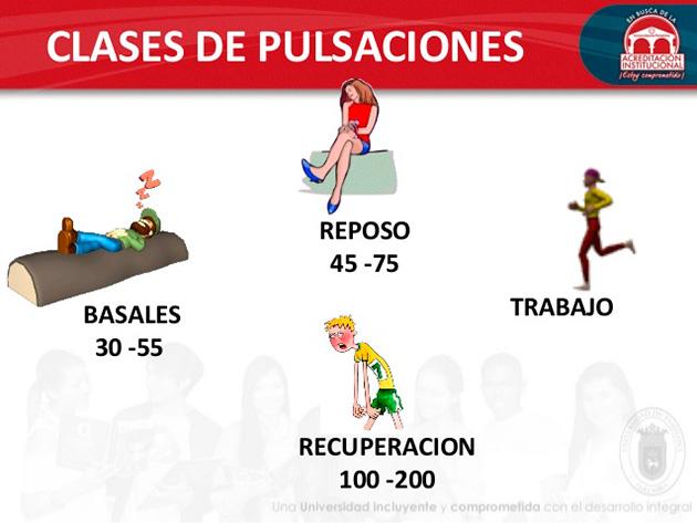 ¿Qué son las pulsaciones basales?